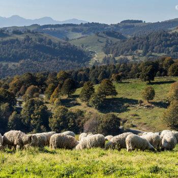 """Presentazione progetto """"Sheep Up"""" - Fiera del Bestiame di Erbezzo"""