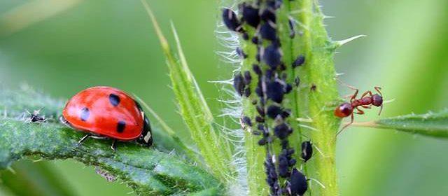 Seminario gratuito sulla difesa delle piante in agricoltura biologica