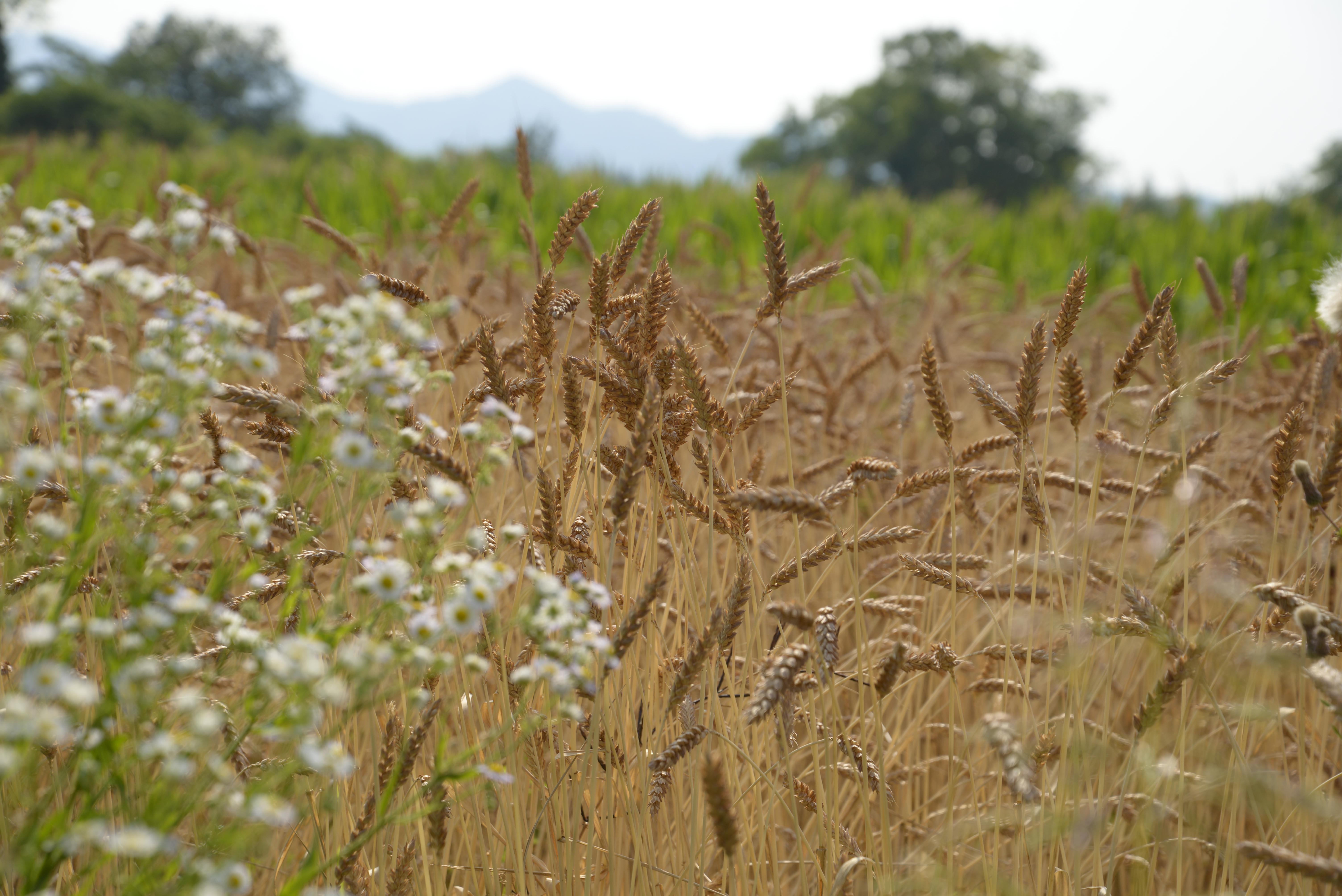 Biodiversità a partire dai semi . L'agricoltura del futuro