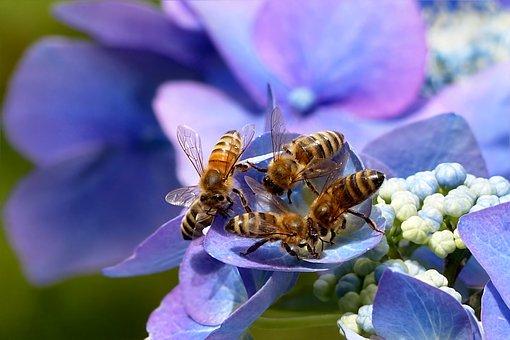 Convegno: L'ape bene comune, i comuni amici delle api