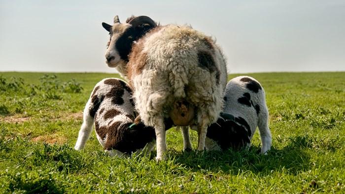 Cos'è il benessere animale?